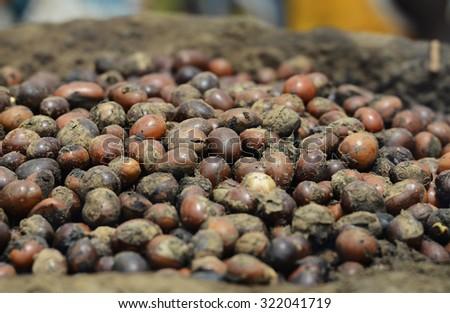 Shea Nut Butter Preparation (Karita) in Bamako, Mali  - stock photo
