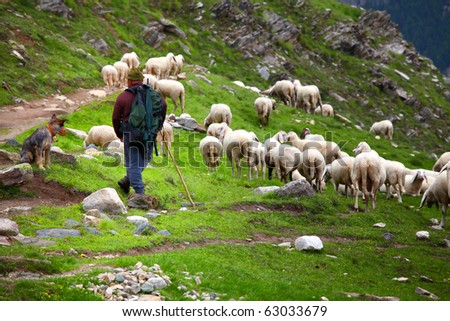 shepherd at work on italian alps - stock photo
