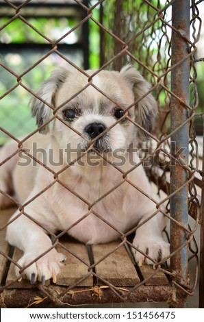 Shih Tzu  lonely dog in cage  - stock photo