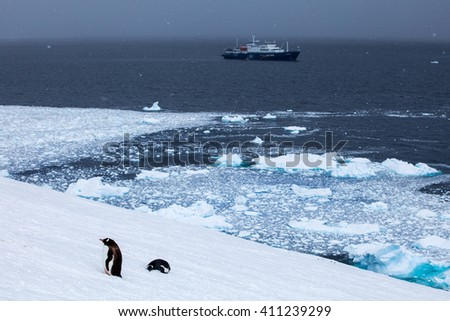 Ship in ocean and gentoo penguins on shore - stock photo