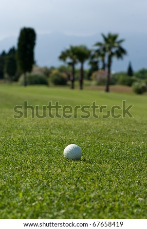 Shot of a golf course with palm trees focused on a ball