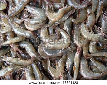 shrimp production - stock photo