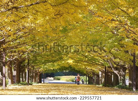 ?Sidewalk and big tree with yellow leaf at park in beautiful autumn season? - stock photo
