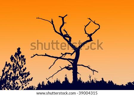 silhouette dry tree - stock photo