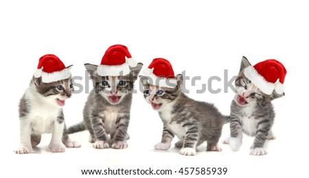 Singing Christmas Kittens Wearing Red Hat on White - stock photo