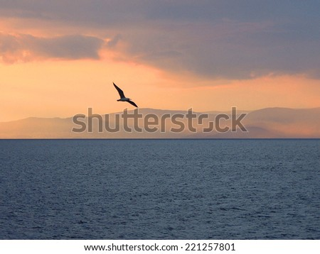 Single Seagull At Sunset