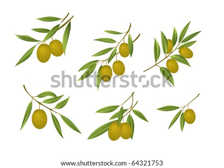 Six green olive branches - stock photo