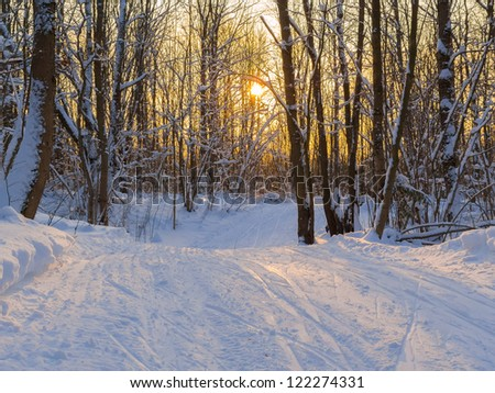 Ski tracks through the winter forest. Clear sunny day in good weather - stock photo