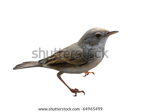 Small birdy on a white background It is isolated