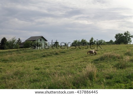 Small pony in a field