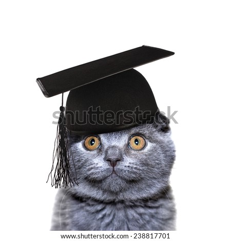 Smart Cat in the graduate cap isolated on a white background - stock photo