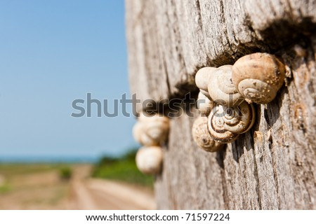 ,snails that crawl on wood,