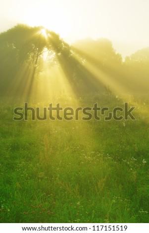 solar beam at dawn on the morning runs through the trees - stock photo