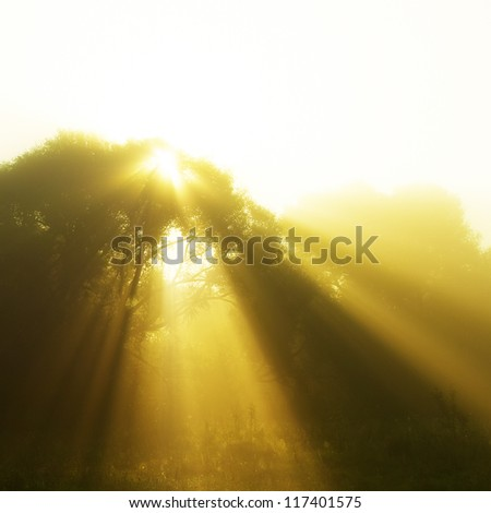 solar beam at dawn on the morning runs through the trees - stock photo