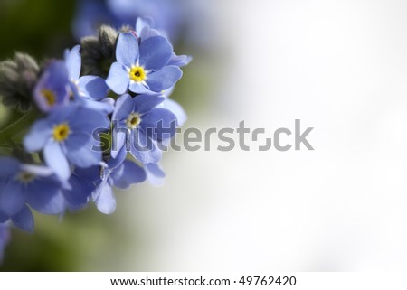 Spring Blue Flowers - stock photo