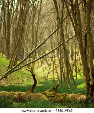 Spring deciduous forest with trees and green grass, nature background - stock photo