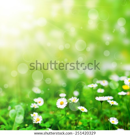 spring flower field  on the sky. nature abstract - stock photo