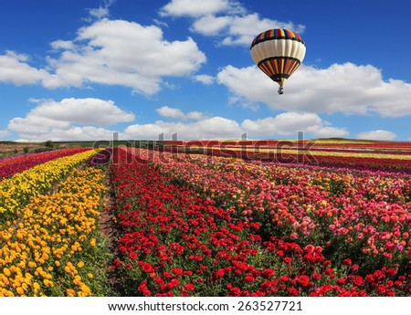 Spring windy day on the farm. In the sky flying scenic balloons. The colorful buttercups - stock photo