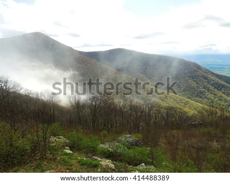 springtime in foggy  shenandoah national park, virginia        - stock photo