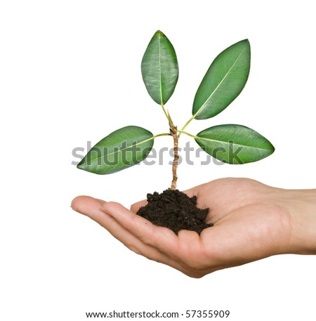 sprout in palm as a symbol of nature protection - stock photo