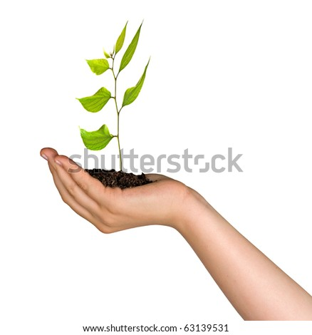 sprout in palm as a symbol of nature protection