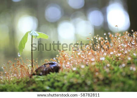 Sprout in the forest. - stock photo