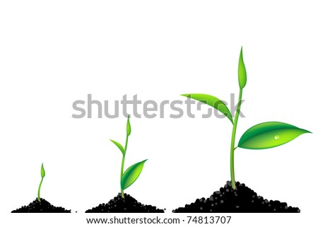 3 Sprouts, Green Young Plant Life Process, Isolated On White Background - stock photo