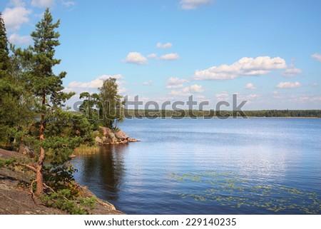 spruce on rock, Baltic sea                        - stock photo