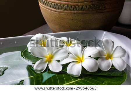 (still life) plumeria flowers decorated on green leaf and water, art corner - stock photo