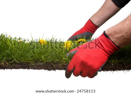 strip of grass and soil with garden-gloves isolated on white background - stock photo