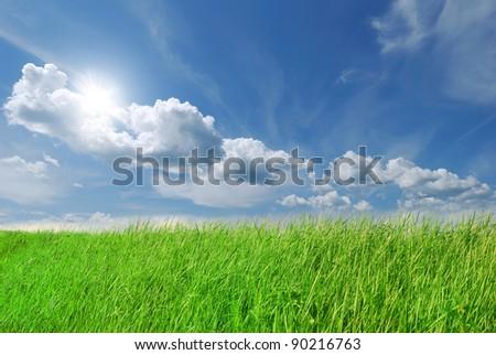 Summer green grass on blue sky - stock photo