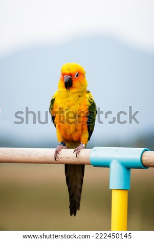 Sun conure parrot on the background of nature.