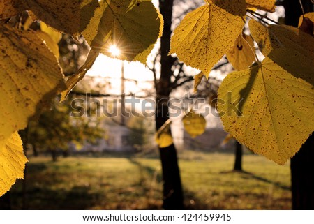 Sun in the leaves  - stock photo