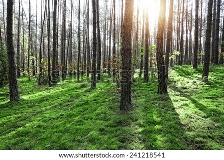 Sunny and green forest - stock photo
