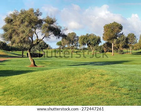 Sunny Morning On A Green Golf Course         - stock photo