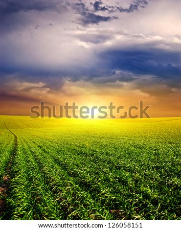 . Sunset on the field of wheat. grass,blue sky and sun. Rural landscape.