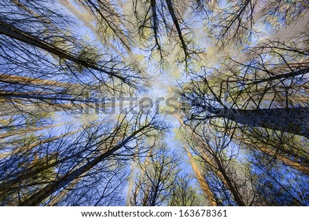 surreal trees in a forest   view from below - stock photo