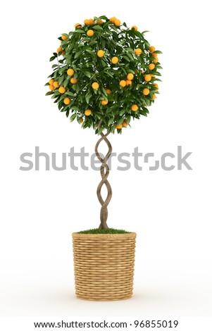 tangerines tree isolated over white - stock photo