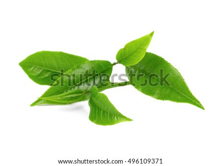 tea leaves isoalted on the white background