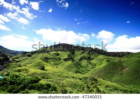 Tea Plantation and blue sky with cloud in Cameron Highland - stock photo