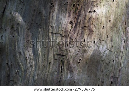 texture of an old tree. wild forest median strip europe. Rays of the sun through the trees in the wild fores. - stock photo