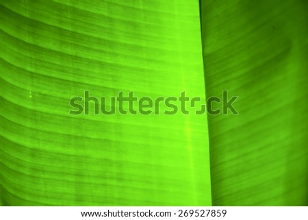 thailand in the light  abstract leaf and his veins background  of a  green  black   kho samui bay   - stock photo