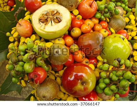 thanksgiving occasion - stock photo