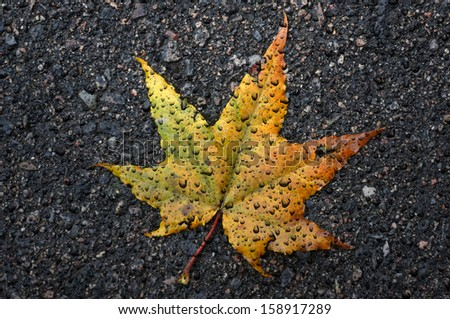 The autumn maple leaf with drops of a rain lies on asphalt                              - stock photo