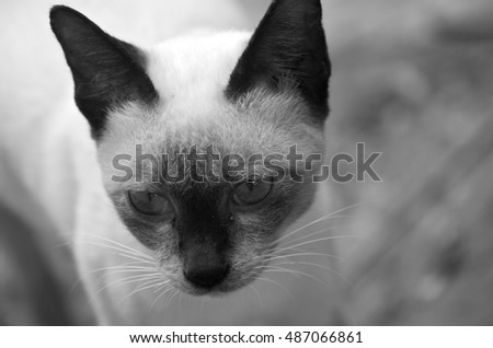 The black and white cat pictures