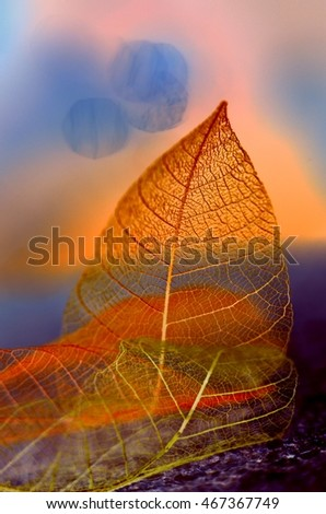 The composition of skeletonized leaves