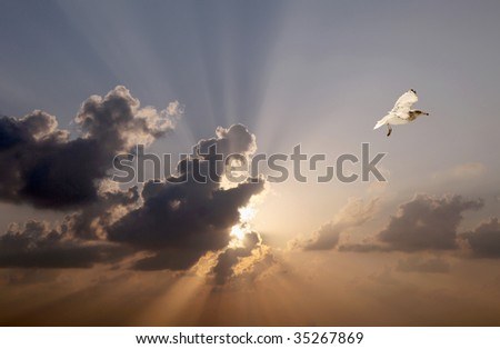 The flight of seagulls in the sunset.
