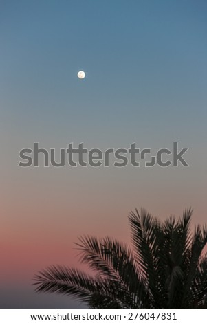 The Full Moon in daylight blue sky and palm. Egypt - stock photo