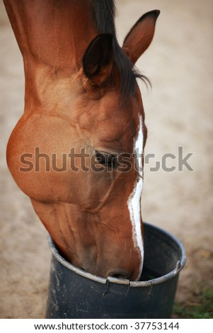 The portrait of the horse during the feeding on the farm.