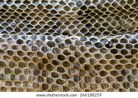 The skin of Python. - stock photo